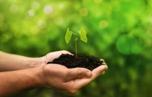 non-profit organizations for a global environment cause
