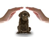 Grants for Animal Shelter